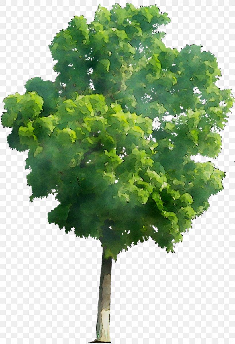 Leaf Greens Tree Plant Stem Herb, PNG, 860x1259px, Leaf, Annual Plant, Elm, Flower, Flowering Plant Download Free