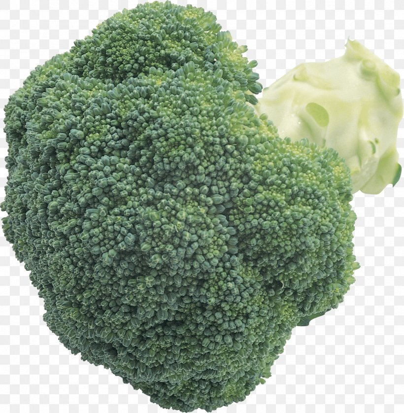Broccoli Cabbage Cauliflower Brussels Sprout, PNG, 1354x1384px, Broccoli, Brassica Oleracea, Broccoli Slaw, Brussels Sprout, Cabbage Download Free