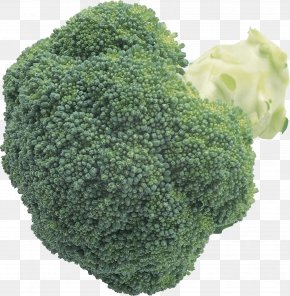 Broccoli Image - Broccoli Cabbage Cauliflower Brussels Sprout PNG