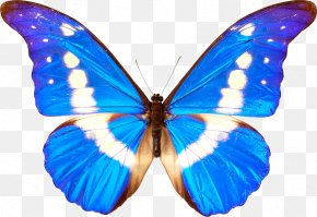 Butterfly Transparent - Butterfly Clip Art PNG