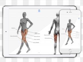 Woman - Human Anatomy Muscle Human Body Woman PNG