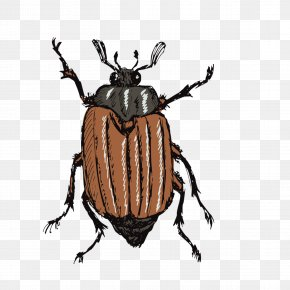 Beetle - Drawing Stock Photography Illustration PNG