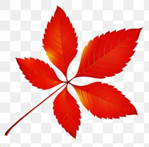 Symmetry Flowering Plant - Leaf Red Plant Flower Tree PNG