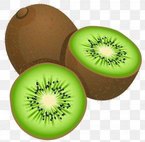 Large Painted Kiwi Frut Clipart - Kiwifruit Stock Photography Clip Art PNG