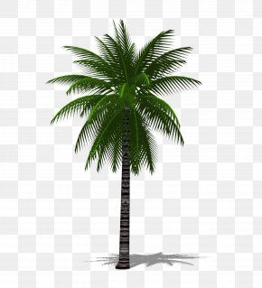 A Palm Tree 3D - Date Palm Arecaceae Tree Chuniophoenix Hainanensis PNG