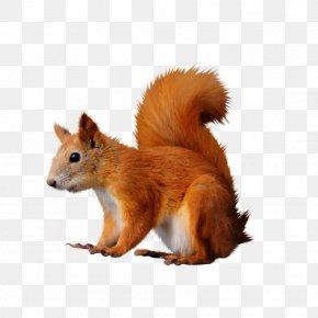 Two Wheeler - Raccoon Fox Squirrel PNG