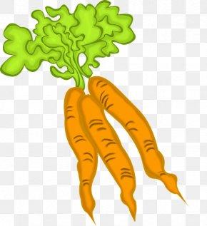 Carrot - Carrot Food Leaf Vegetable Vegetarian Cuisine PNG