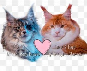 Kitten - Maine Coon Norwegian Forest Cat Whiskers Kitten Siberian Cat PNG