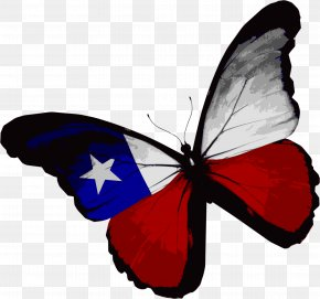 American Butterfly - Flag Of Texas Butterfly Flag Of The United States PNG