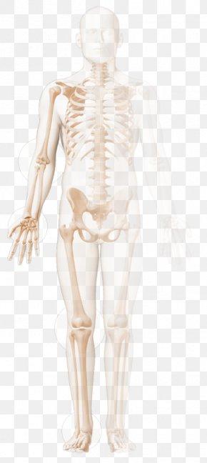 Chronic Childhood Arthritis Rheumatoid Arthritis Reactive Arthritis Rheumatology PNG