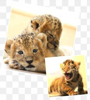 Cheetah - Whiskers Cheetah Cat Fur Snout PNG