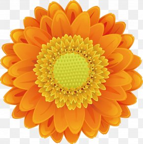 Cartoon Sunflower Vector - Drawing Cartoon PNG