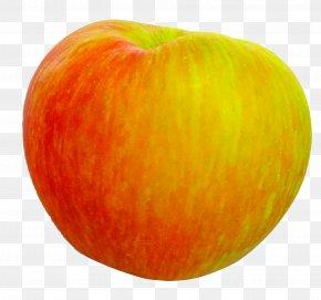Apple Fruit - Apple Honeycrisp Food Fruit McIntosh PNG