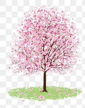 Vector Cherry Tree - Cherry Blossom Drawing Tree PNG