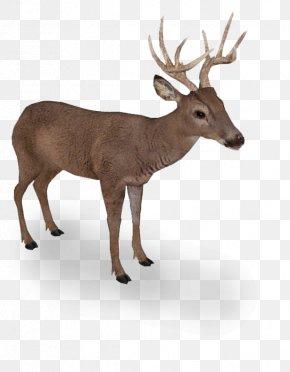 Supermoto - Elk White-tailed Deer Reindeer Even-toed Ungulates PNG
