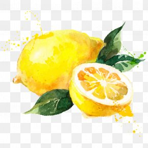 Iphone 6 - Watercolor Painting Lemon Royalty-free Drawing PNG