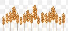 Wheat - Wheat Porridge PNG