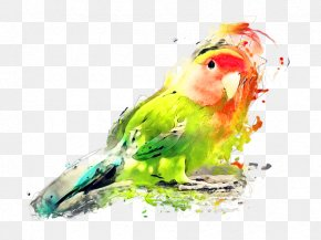 Ramadan Watercolor Painting - Budgerigar Lovebird Watercolor Painting Art PNG