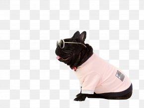 Bespectacled Fashion Pet Dog - French Bulldog Dog Breed Puppy Pet PNG