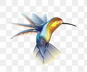 Hummingbird Picture - Hummingbird Clip Art PNG