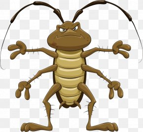 Beetle - Cockroach Cartoon Royalty-free Clip Art PNG