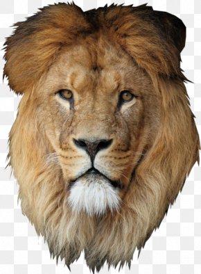 Lion - Lion Desktop Wallpaper Cecil PNG