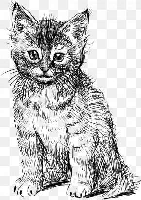 Hand Drawn Cute Cat Creative - British Shorthair Abyssinian Kitten Drawing PNG