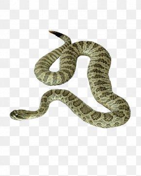 Snake Image Picture Download - Snake PNG