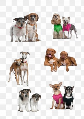 Two Dogs Together - Dog Breed Puppy Companion Dog PNG