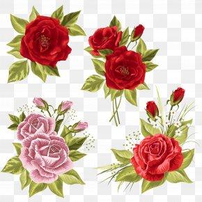 Rose - Garden Roses Wedding Invitation Centifolia Roses Beach Rose PNG