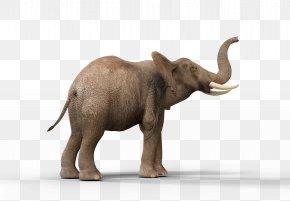 African Elephant - Indian Elephant African Elephant Elephantidae Tusk DeviantArt PNG