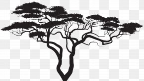 Exotic Tree Silhouette Clip Art Image - Silhouette Tree Royalty-free Clip Art PNG