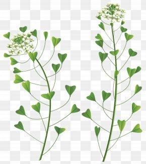 Wild Flower Clip Art Image - Flower Clip Art PNG