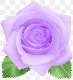 Rose Purple Clip Art Image - Garden Roses Centifolia Roses Clip Art PNG