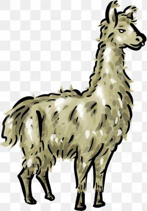 Llama Head Cliparts - Llama Clip Art PNG