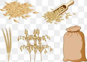 Coarse Cereals And Brown Rice - Cereal Brown Rice Food Oat PNG