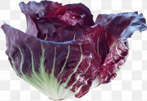 Cabbage - Red Cabbage Vegetable Food PNG