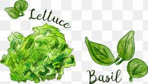 Vector Hand Painted Vegetables - Leaf Food Spring Greens PNG