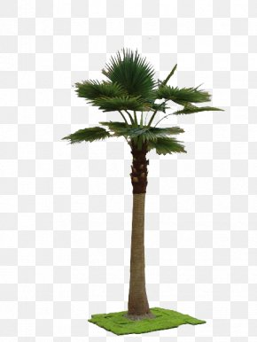 A Simulation Tree - Washingtonia Robusta Arecaceae Tree Bamboo Plant PNG
