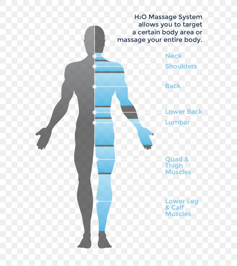 Massage Hydrotherapy Human Body Diagram  Png  725x921px