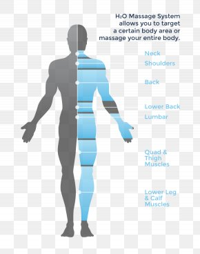 Body Muscle Anatomy Therapy - Massage Hydrotherapy Human Body Diagram PNG