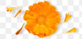 Nature Republic Calendula Officinalis Brand PNG