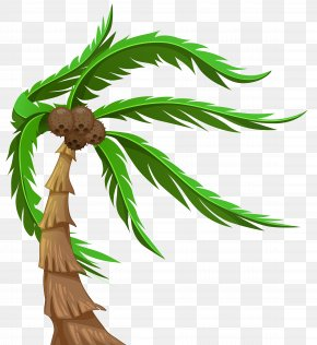 Palm With Coconuts Transparent Clip Art Image - Arecaceae Clip Art PNG
