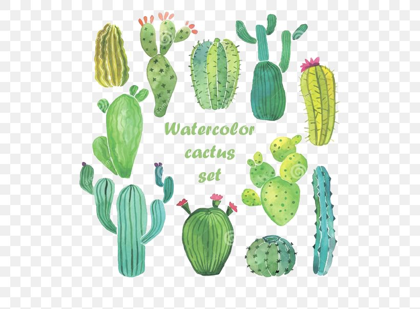 Cactaceae Watercolor Painting Drawing, PNG, 564x603px, Cactaceae, Cactus, Caryophyllales, Drawing, Flowering Plant Download Free