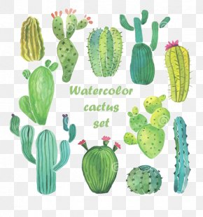 Watercolor Cactus - Cactaceae Watercolor Painting Drawing PNG