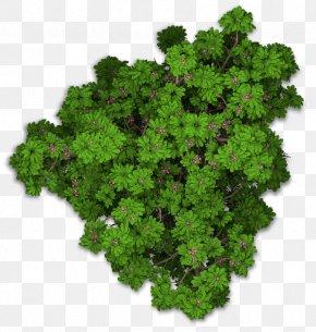 Tree Top View - Lacinato Kale Sweet Chestnut Leaf Vegetable Plant PNG
