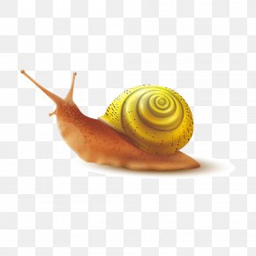 Golden Snail Shell Back - Snail Slime Gastropod Shell PNG