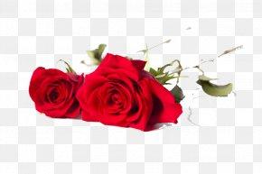 Rose - Beach Rose Rosa Chinensis Rosa Multiflora Flower Reusable Shopping Bag PNG