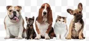 Pet Dogs And Cats - Pet Sitting Dog Cat Beechwood Veterinary Clinic PNG