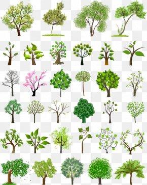Tree - Tree Euclidean Vector Illustration PNG